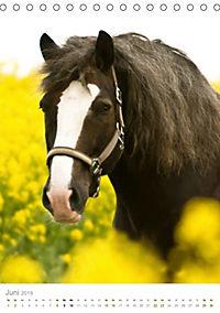 Schwarzwälder Kaltblut Pferde im Portrait (Tischkalender 2019 DIN A5 hoch) - Produktdetailbild 6