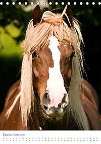 Schwarzwälder Kaltblut Pferde im Portrait (Tischkalender 2019 DIN A5 hoch) - Produktdetailbild 9