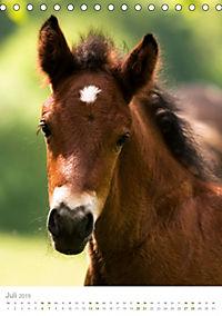 Schwarzwälder Kaltblut Pferde im Portrait (Tischkalender 2019 DIN A5 hoch) - Produktdetailbild 7
