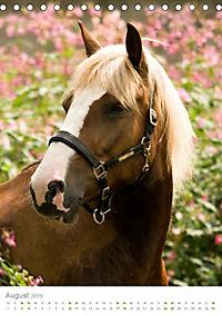 Schwarzwälder Kaltblut Pferde im Portrait (Tischkalender 2019 DIN A5 hoch) - Produktdetailbild 8