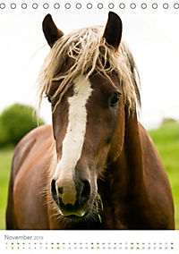 Schwarzwälder Kaltblut Pferde im Portrait (Tischkalender 2019 DIN A5 hoch) - Produktdetailbild 11