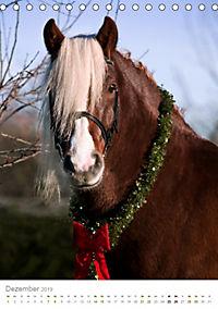 Schwarzwälder Kaltblut Pferde im Portrait (Tischkalender 2019 DIN A5 hoch) - Produktdetailbild 12