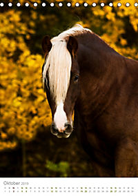 Schwarzwälder Kaltblut Pferde im Portrait (Tischkalender 2019 DIN A5 hoch) - Produktdetailbild 10
