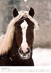 Schwarzwälder Kaltblut Pferde im Portrait (Wandkalender 2019 DIN A3 hoch) - Produktdetailbild 1