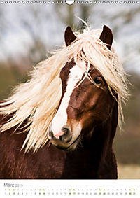 Schwarzwälder Kaltblut Pferde im Portrait (Wandkalender 2019 DIN A3 hoch) - Produktdetailbild 3
