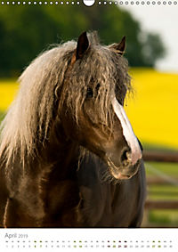 Schwarzwälder Kaltblut Pferde im Portrait (Wandkalender 2019 DIN A3 hoch) - Produktdetailbild 4