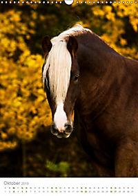 Schwarzwälder Kaltblut Pferde im Portrait (Wandkalender 2019 DIN A3 hoch) - Produktdetailbild 10