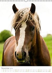 Schwarzwälder Kaltblut Pferde im Portrait (Wandkalender 2019 DIN A3 hoch) - Produktdetailbild 11