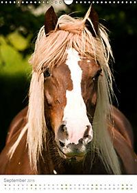 Schwarzwälder Kaltblut Pferde im Portrait (Wandkalender 2019 DIN A3 hoch) - Produktdetailbild 9