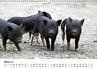 Schwein gehabt! (Wandkalender 2019 DIN A3 quer) - Produktdetailbild 3