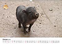 Schwein gehabt! (Wandkalender 2019 DIN A3 quer) - Produktdetailbild 10