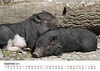 Schwein gehabt! (Wandkalender 2019 DIN A3 quer) - Produktdetailbild 12