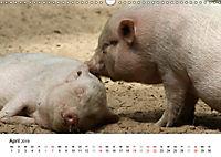 Schwein gehabt! (Wandkalender 2019 DIN A3 quer) - Produktdetailbild 4