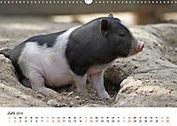 Schwein gehabt! (Wandkalender 2019 DIN A3 quer) - Produktdetailbild 6