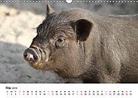 Schwein gehabt! (Wandkalender 2019 DIN A3 quer) - Produktdetailbild 5