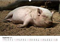 Schwein gehabt! (Wandkalender 2019 DIN A3 quer) - Produktdetailbild 9