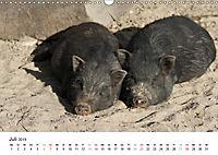 Schwein gehabt! (Wandkalender 2019 DIN A3 quer) - Produktdetailbild 7