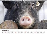 Schwein gehabt! (Wandkalender 2019 DIN A3 quer) - Produktdetailbild 11