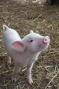 Schweinchen Wilbur und seine Freunde - Produktdetailbild 2