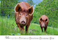 Schweine 2019 - Produktdetailbild 4