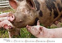 Schweine 2019 - Produktdetailbild 2