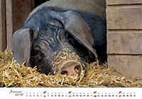 Schweine 2019 - Produktdetailbild 1