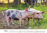 Schweine 2019 - Produktdetailbild 3