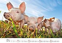 Schweine 2019 - Produktdetailbild 5
