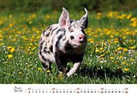 Schweine 2019 - Produktdetailbild 6