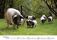 Schweine 2019 - Produktdetailbild 10