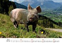 Schweine 2019 - Produktdetailbild 7