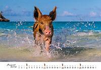Schweine 2019 - Produktdetailbild 8