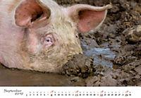 Schweine 2019 - Produktdetailbild 9