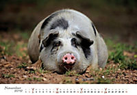 Schweine 2019 - Produktdetailbild 11