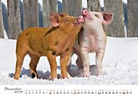 Schweine 2019 - Produktdetailbild 12