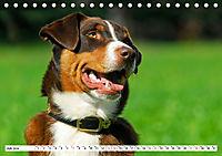 Schweizer Sennenhunde - die Hunde aus den Schweizer Alpen (Tischkalender 2019 DIN A5 quer) - Produktdetailbild 7