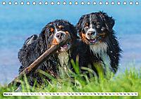 Schweizer Sennenhunde - die Hunde aus den Schweizer Alpen (Tischkalender 2019 DIN A5 quer) - Produktdetailbild 5