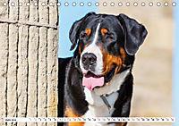 Schweizer Sennenhunde - die Hunde aus den Schweizer Alpen (Tischkalender 2019 DIN A5 quer) - Produktdetailbild 6
