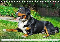 Schweizer Sennenhunde - die Hunde aus den Schweizer Alpen (Tischkalender 2019 DIN A5 quer) - Produktdetailbild 3