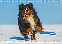Schweizer Sennenhunde - die Hunde aus den Schweizer Alpen (Tischkalender 2019 DIN A5 quer) - Produktdetailbild 1