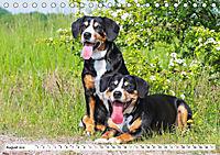 Schweizer Sennenhunde - die Hunde aus den Schweizer Alpen (Tischkalender 2019 DIN A5 quer) - Produktdetailbild 8