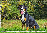Schweizer Sennenhunde - die Hunde aus den Schweizer Alpen (Tischkalender 2019 DIN A5 quer) - Produktdetailbild 12