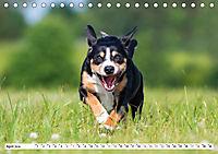 Schweizer Sennenhunde - die Hunde aus den Schweizer Alpen (Tischkalender 2019 DIN A5 quer) - Produktdetailbild 4