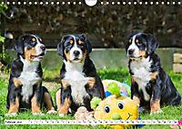 Schweizer Sennenhunde - die Hunde aus den Schweizer Alpen (Wandkalender 2019 DIN A4 quer) - Produktdetailbild 2