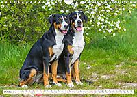 Schweizer Sennenhunde - die Hunde aus den Schweizer Alpen (Wandkalender 2019 DIN A4 quer) - Produktdetailbild 10