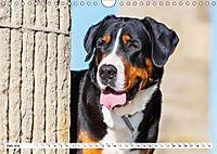 Schweizer Sennenhunde - die Hunde aus den Schweizer Alpen (Wandkalender 2019 DIN A4 quer) - Produktdetailbild 6