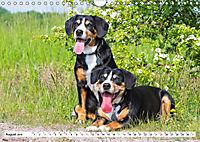 Schweizer Sennenhunde - die Hunde aus den Schweizer Alpen (Wandkalender 2019 DIN A4 quer) - Produktdetailbild 8