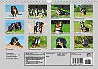 Schweizer Sennenhunde - die Hunde aus den Schweizer Alpen (Wandkalender 2019 DIN A4 quer) - Produktdetailbild 13