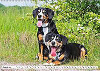 Schweizer Sennenhunde - die Hunde aus den Schweizer Alpen (Wandkalender 2019 DIN A2 quer) - Produktdetailbild 8