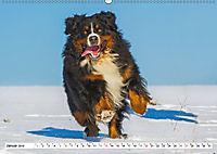 Schweizer Sennenhunde - die Hunde aus den Schweizer Alpen (Wandkalender 2019 DIN A2 quer) - Produktdetailbild 1